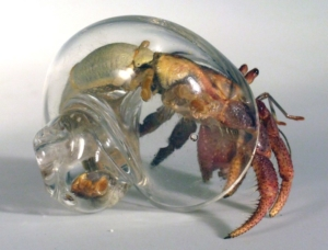 Glass Hermit Crab Shell