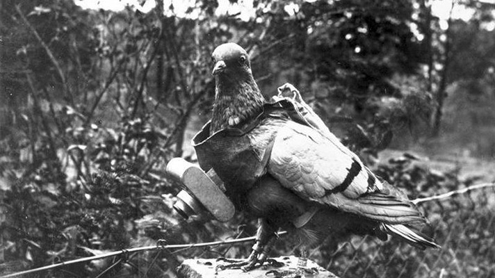 Julius Neubronner Photographer Pigeon