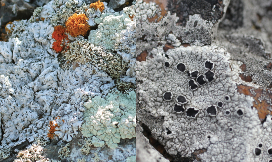 Impercepibly and Slowly Opening (lichen 2)